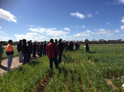 Sandy Soil site - AgGrow field day 2017
