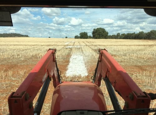 Incorporating lime before sowing lentil trial 2017