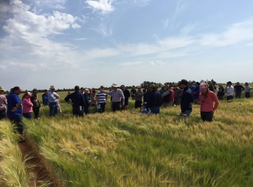 Ag Grow field day Merriwagga 2015