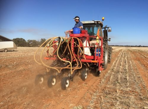 Sowing dryland trials at Yenda