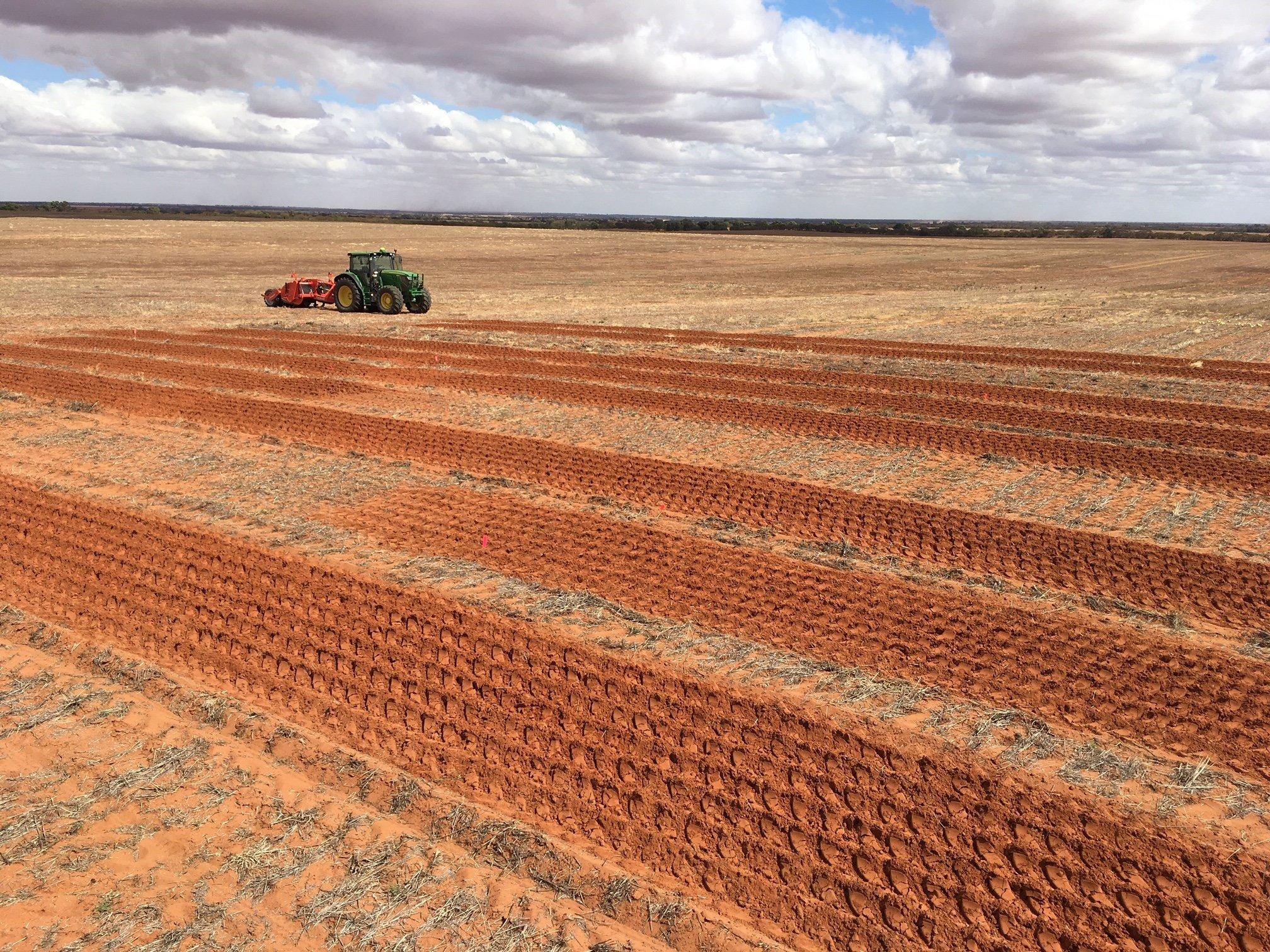 Sandy Soil Validation Trial: Sandy Soil Project CSP00203 - Sandy Soil Amelioration & Mitigation Practices (year 3) »