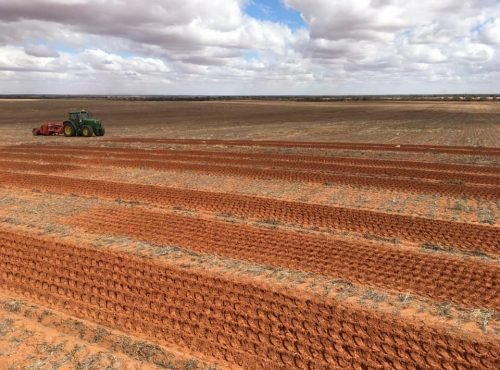 Sandy Soil Impacts Trial - spading treatments