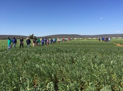 Ag Grow Field Day 2019