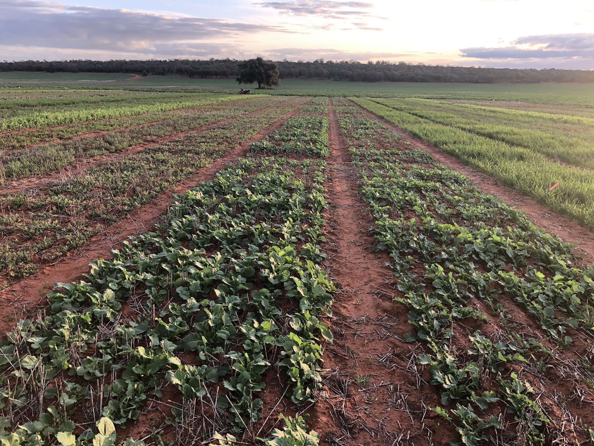 Ag Grow Pre-emergent Herbicide Matrix Trial »
