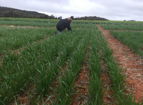 Assessing RWA trial 2019